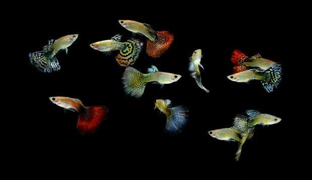 Акваріумні рибки та інше
