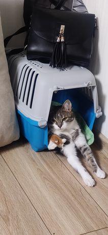 Оренда переноски для кота 20грн/день