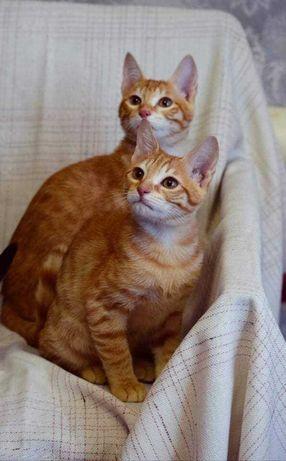 Солнечные котята  в поиске любящей семьи!