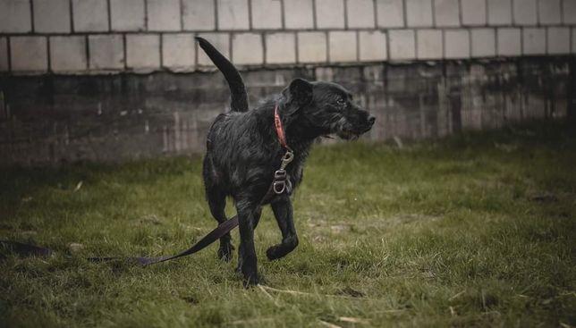 Psiak w średnim wieku czeka na domek gdzie będę członkiem rodziny