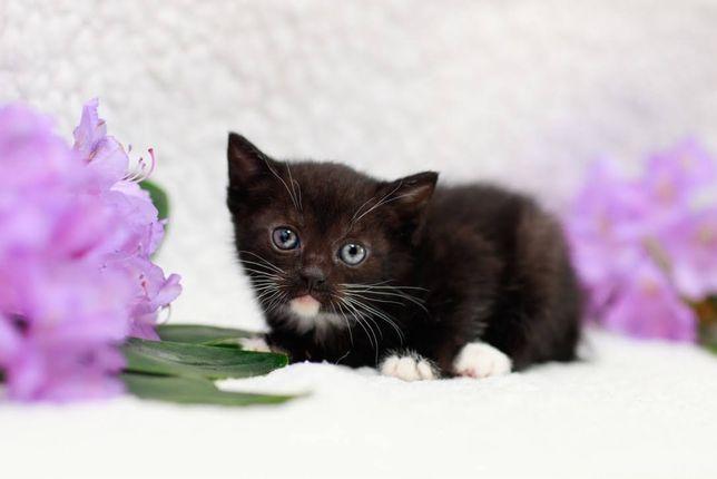 Madarda - miesięczna, przemiła koteczka