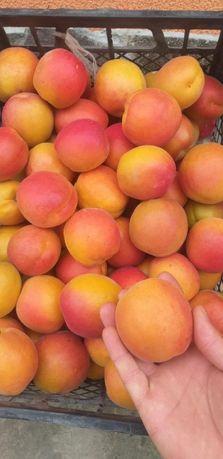 Саджанці абрикоси ананасний, краснощокий, цунамі, ерлі блуш