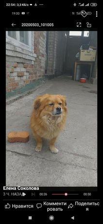 Пропала собака Рабочий посёлок