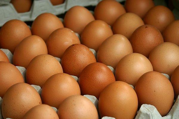 Инкубационное яйцо бройлер Росс 308 Белая Церковь - изображение 1