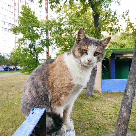 Кошка отдам в хорошие руки бесплатно кошечка Киев