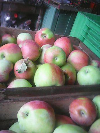 Jabłka deserowe oraz na soki, przetwory,cydr, karmę dla zwierząt