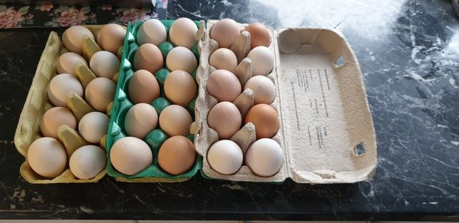 Jajka z wolnego wybiegu od zielononozki.