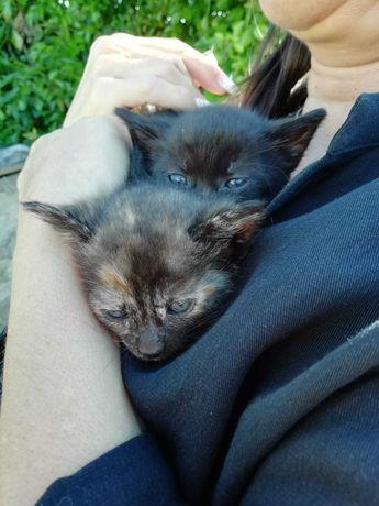 Gatos bebés para adoção responsável