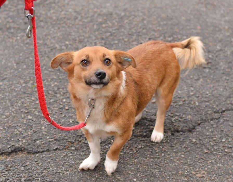 Молодая небольшая собачка Киев - изображение 1