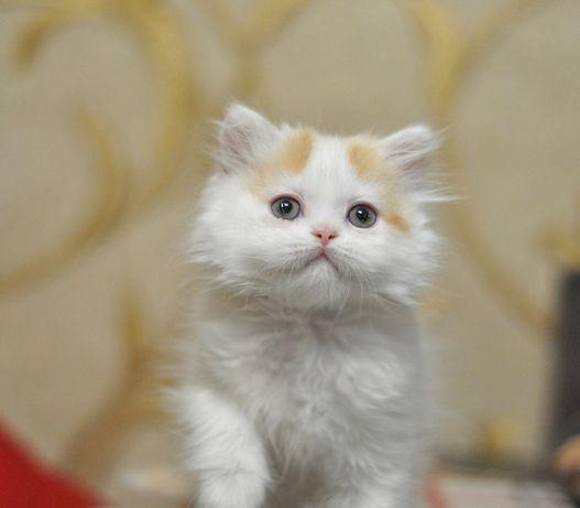 Такой крутой и сладкий котик!