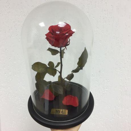 Роза в Колбе +(Коробка,Гравировка,Лепестки).Тренд 2020 года