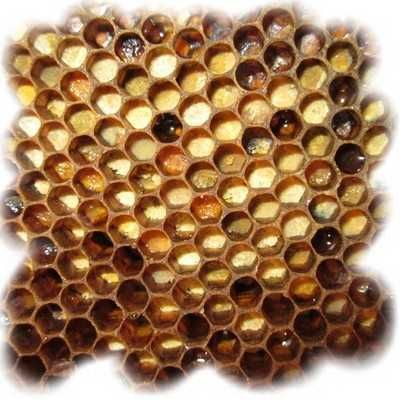 Перга в сотах- ферментированная пчелами пыльца 2021г