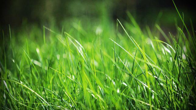 Сухие травы для домашних грызунов.Свои. Натуральные. Кормим своего