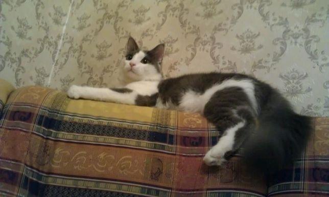 3 года назад потерялся котик