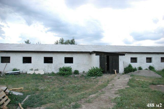 ферма продам окупаемость 4 года , чернигов 33км коровы овечки свиньи