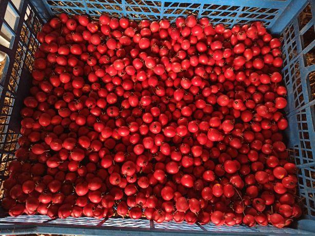 Продаю плоди глоду (бояришник, глід)