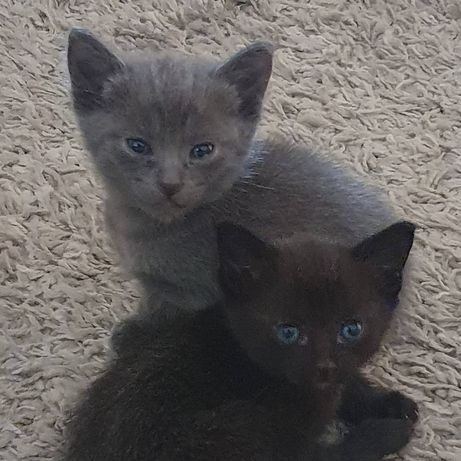 Ofereço gatinho e gatinhas
