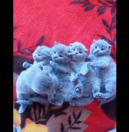 Плюшевые крутые котята!!!Ужгород