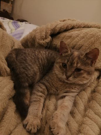 Котенок девочка около 3 месяцев