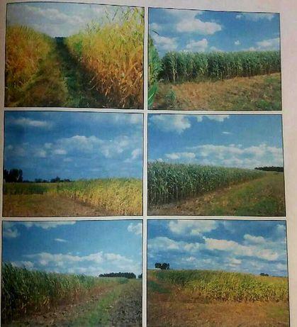 Grunt rolny 3.24 ha