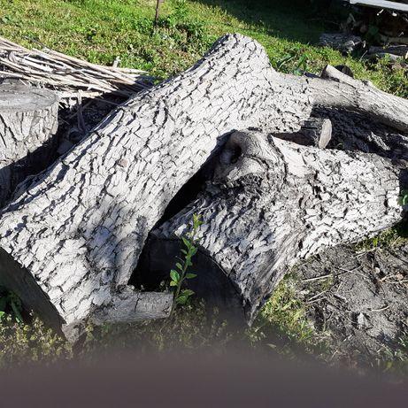 Дерево горіха