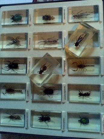Энтомологическая коллекция засушенных насекомых в оргстекле ! Центр