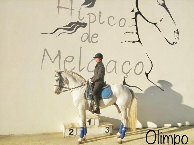 Cavalo Pura Raza Espanhol São Pedro da Torre - imagem 1