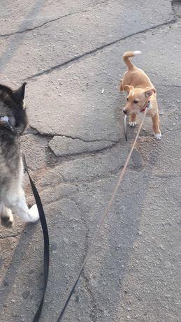 Животные выгул собак