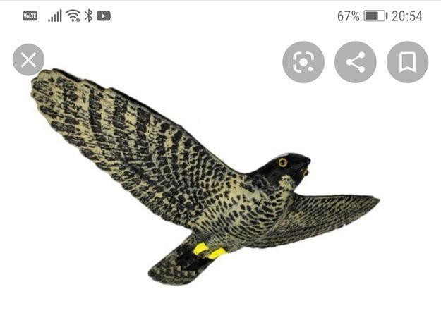 Jastrząb odstraszacz gołębi