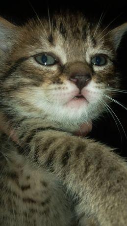 Отдаём в хорошие руки котика!!!
