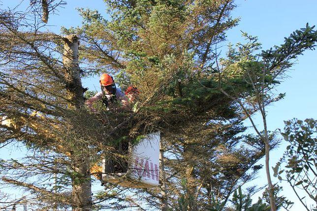 Спил,распил деревьев любой сложности.Возможно с автовышкой