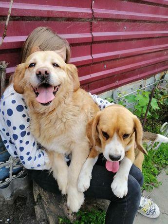 Передержка для собак и котов
