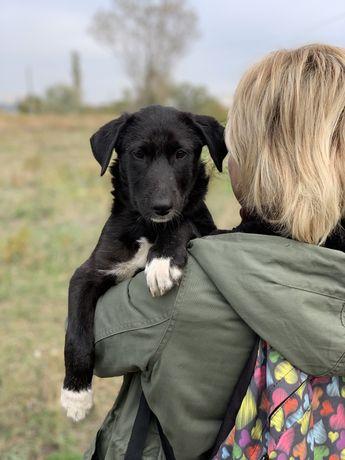 Отдаем щенка в хорошие руки
