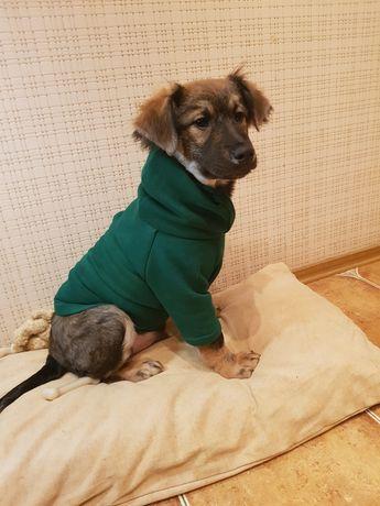 Барні шукає дім, собака, цуцик щенок