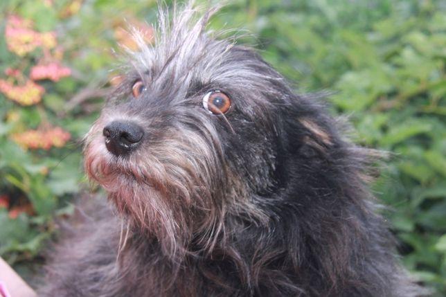 Собака Жу Жу(2 года)очень ласковая,умная,спокойная,ласковая, стерильна