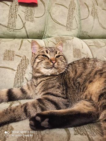 Найден кот в Славянске
