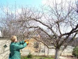 Спил обрезка деревьев. Расчистка участка под ключ