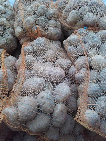 Sprzedam ziemniaki żółte jadalne odmiany Denar