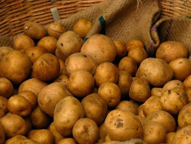 Ziemniaki ODPADOWE/przemysłowe