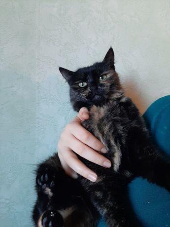 Отдам кошку черепахового окраса ,стерилизована , 1 год