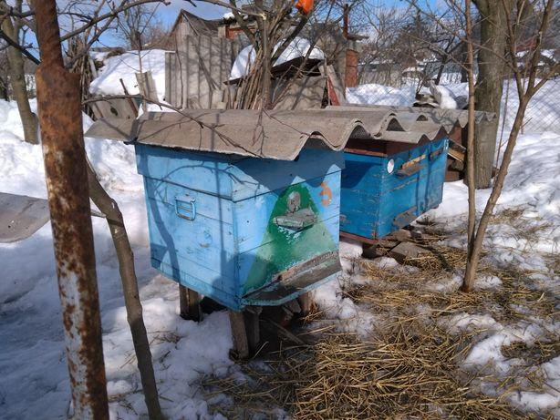 Продам бджолосім'ї, вулики, рамки, медогонку