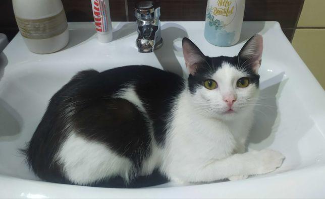 Zaginęła kotka czarno-biała, roczna