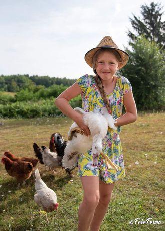 Zamienie młode  kaczki francuskie i gęsi  na przenice lub mieszankę