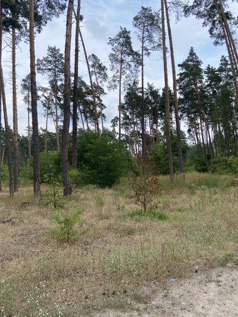 Продам участок 10 соток в Лесной Буче