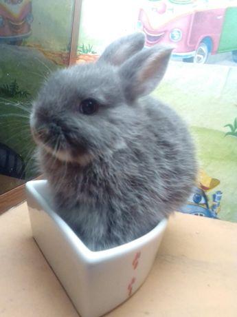 Декоративные, карликовые, мини кролики