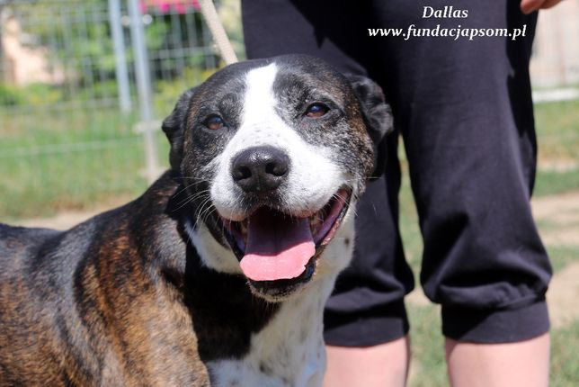 Dallas - energiczny pies