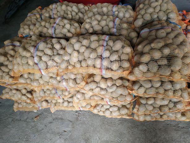 Ziemniaki SORAYA na samym oborniku, czosnek seler por z dowozem !