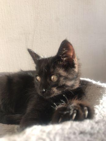 Котята 2 месяца, очень нежные и ласковые