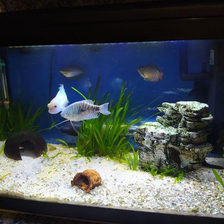 Peixes de Água Quente com Urgência