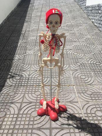 Esqueleto - Corpo Humano